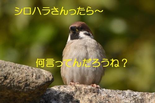 130_201701201915573e7.jpg