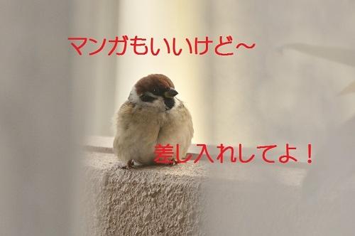 130_20170130185930a08.jpg