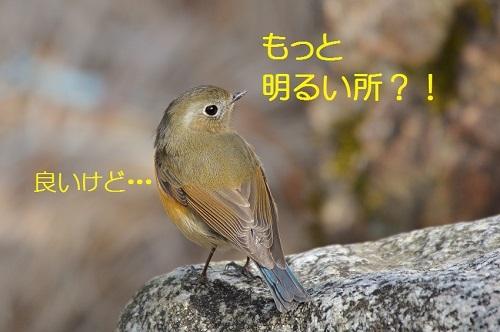 130_20170213205504401.jpg