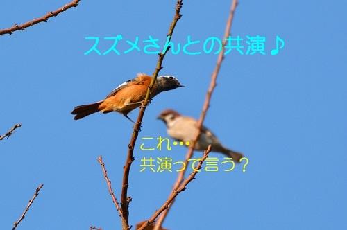 140_201611141852358bf.jpg