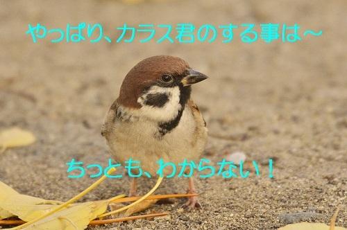 140_201612112253391eb.jpg