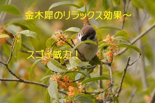 140_20161218210839e45.jpg