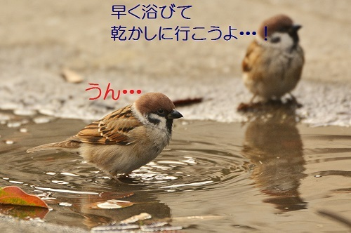 140_201612261942217c7.jpg