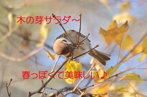 140_20161228195722d37.jpg