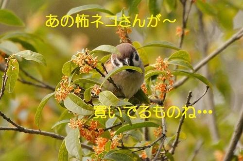 150_20161218210841d8a.jpg