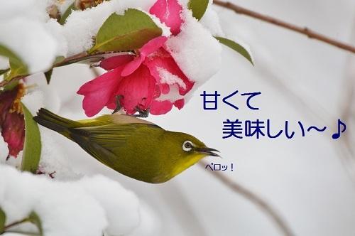 150_20170127212004e3e.jpg