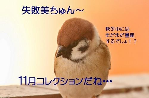 160_201611251930474d2.jpg