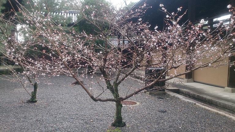 201701京都8