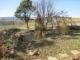 キン・ギンモクセイ、ロウバイの木