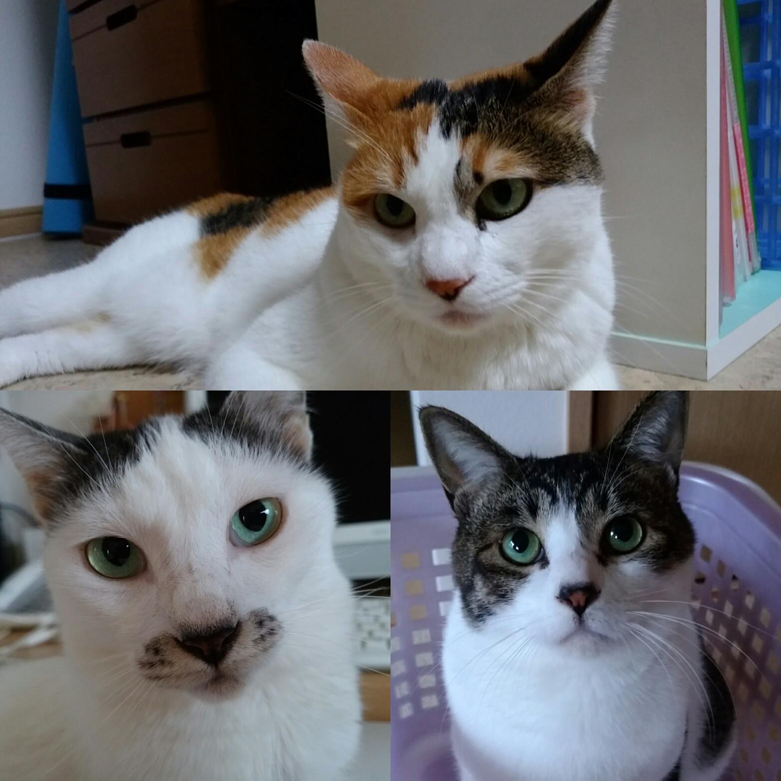 猫年賀状2017