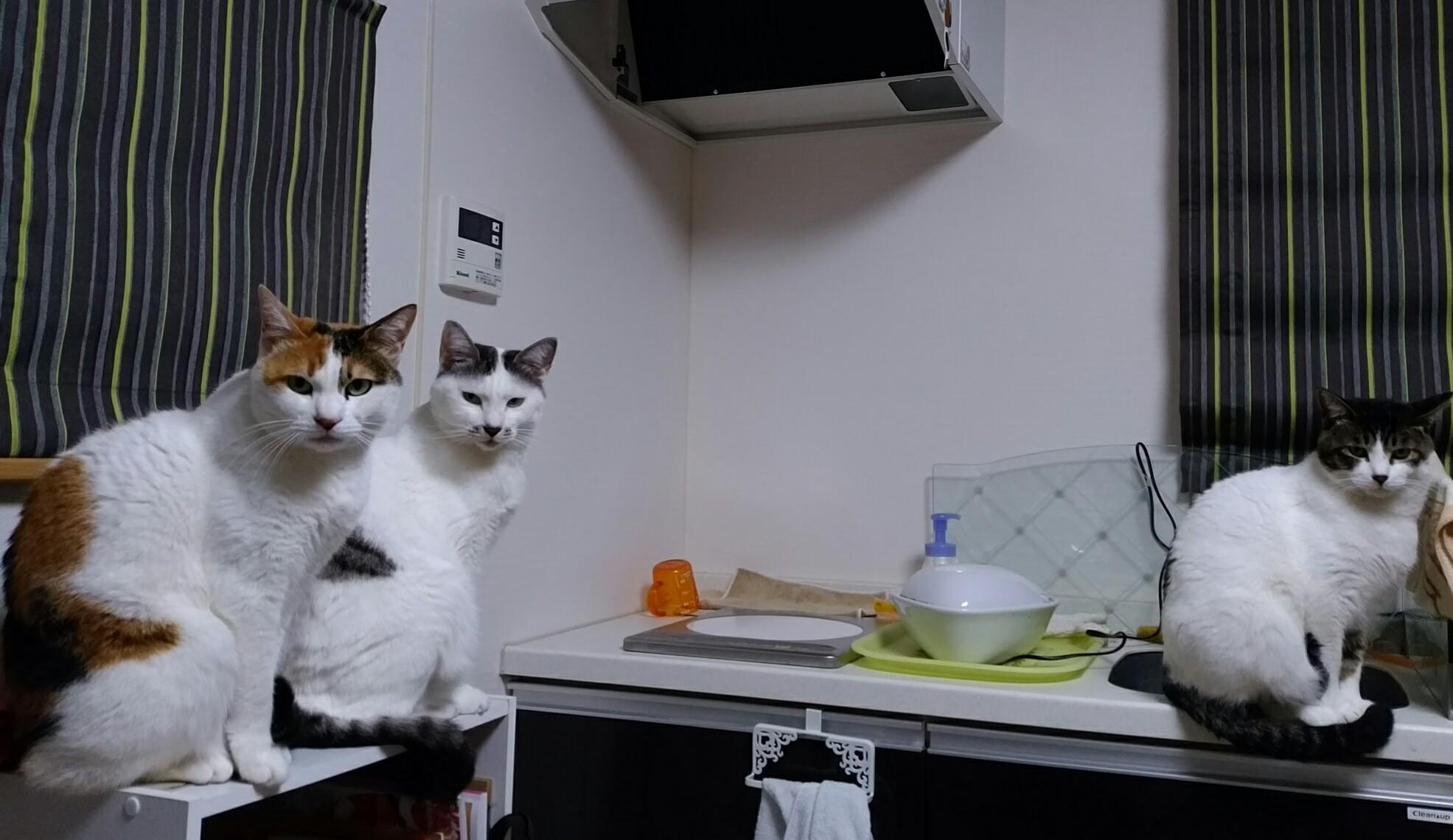 猫たち20170117
