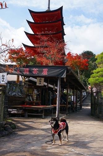 miyajima (7)