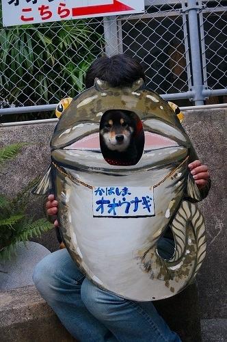 nomozaki (30)