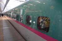 緑にピンクのライン170122