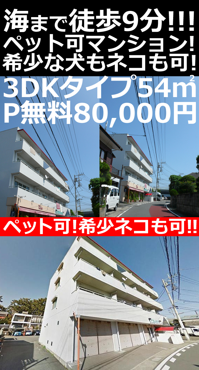 ■物件番号P4853 ペット可マンション!3DKタイプ!ネコも犬も可!海まで5分!P無料7.8万円!