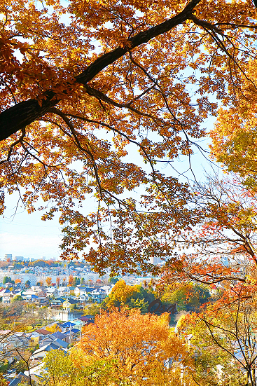 16-12-03_kashinokiyama_0122.jpg