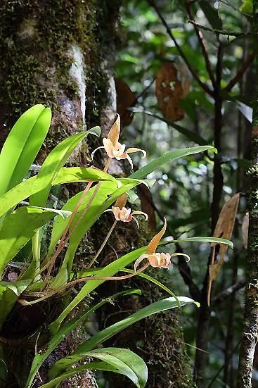 16-12-12_kinabaru-malaysia_0073.jpg