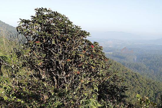 17-01-12_hortonplains-srilanka_0121.jpg