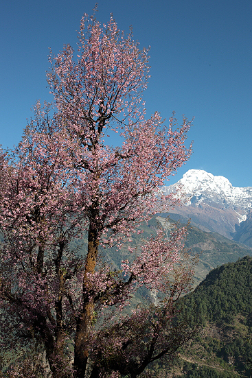 dhampu-nepal_14-11-12-0259.jpg
