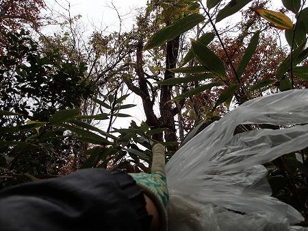 枯れ木発見