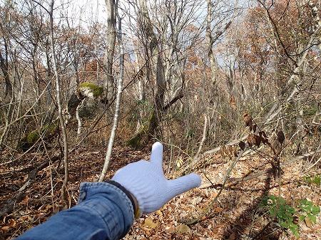 森に入るよ