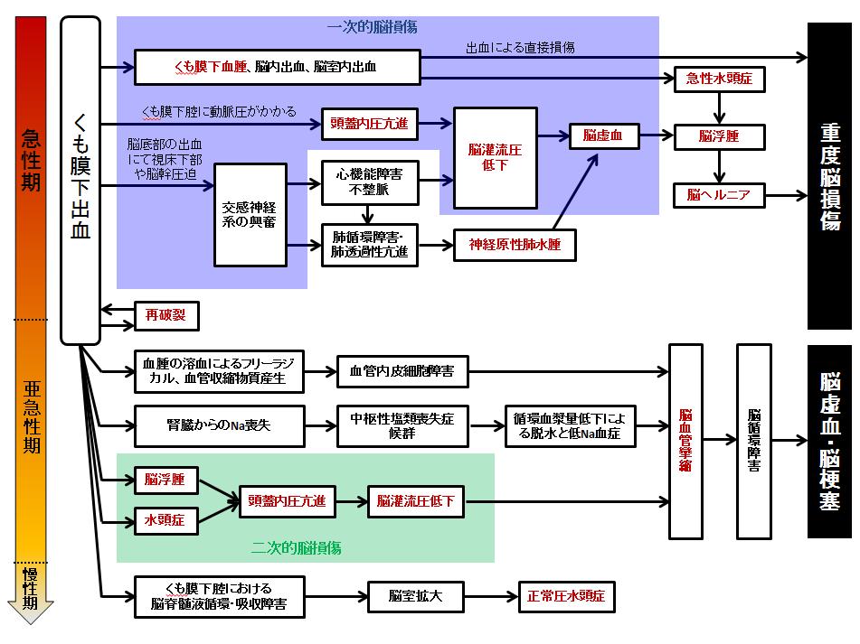 くも膜下出血③ 発症機序、病態と経過~合併症も含めて~ 合併症の関連図