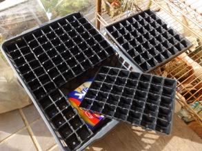 セルボックスの空枠に、多肉カット苗を発根するまで簡易挿し木する♪2016.12.02