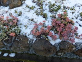雹と雪が降りました((+_+))2017.02.10~.pm7:00~02.11未明まで