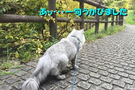 散歩編12