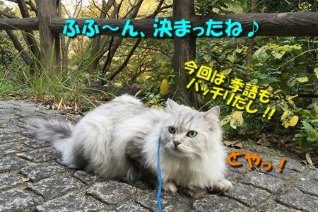 散歩編14
