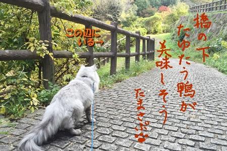散歩編13