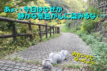散歩編11