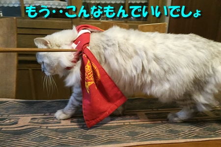 おねえのコレクション13