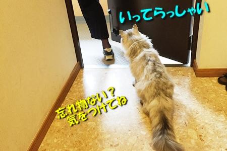 FINAL FANTASY XVつづき13