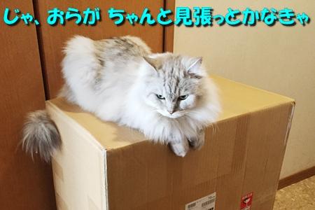 箱鑑定士3