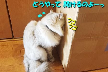 箱鑑定士7