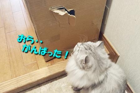 箱鑑定士9