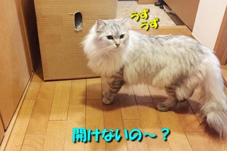 箱鑑定士11