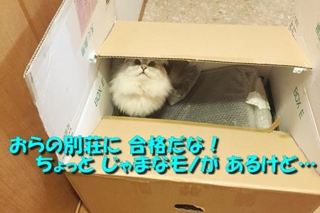 箱鑑定士13