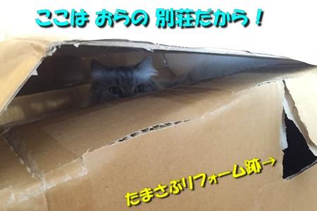 """箱は入ってこそ""""華""""3"""