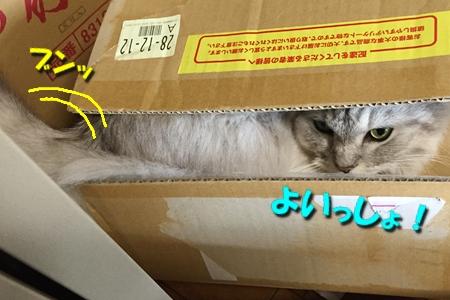 """箱は入ってこそ""""華""""14"""