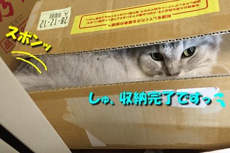 """箱は入ってこそ""""華""""15"""