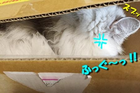 """箱は入ってこそ""""華""""17"""