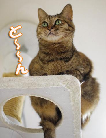 うぇrうぇrうぇれwrうぇrのコピー