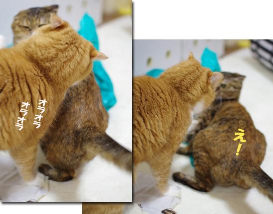 sぢょdfdf定 1のコピー