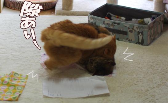 猫バトルsdsfggg