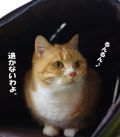きゃりーにsd^¥あ^sだsだピー