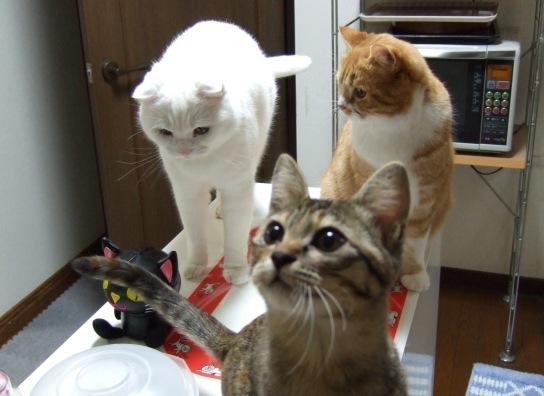 キッチンカウンターに集合