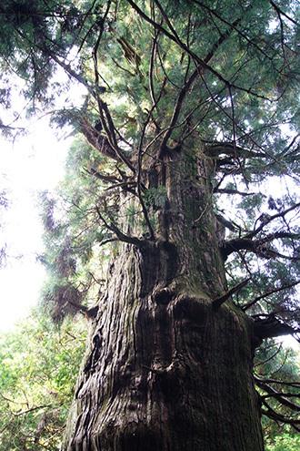 161022湯島の大杉④