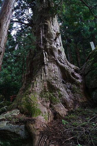 161022湯島の大杉⑤